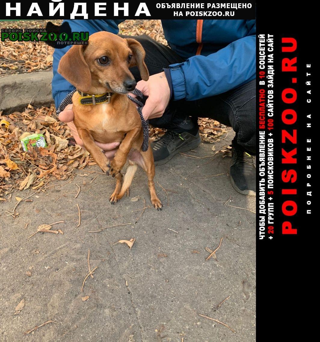 Найдена собака верну вледельцу потерчшку Липецк
