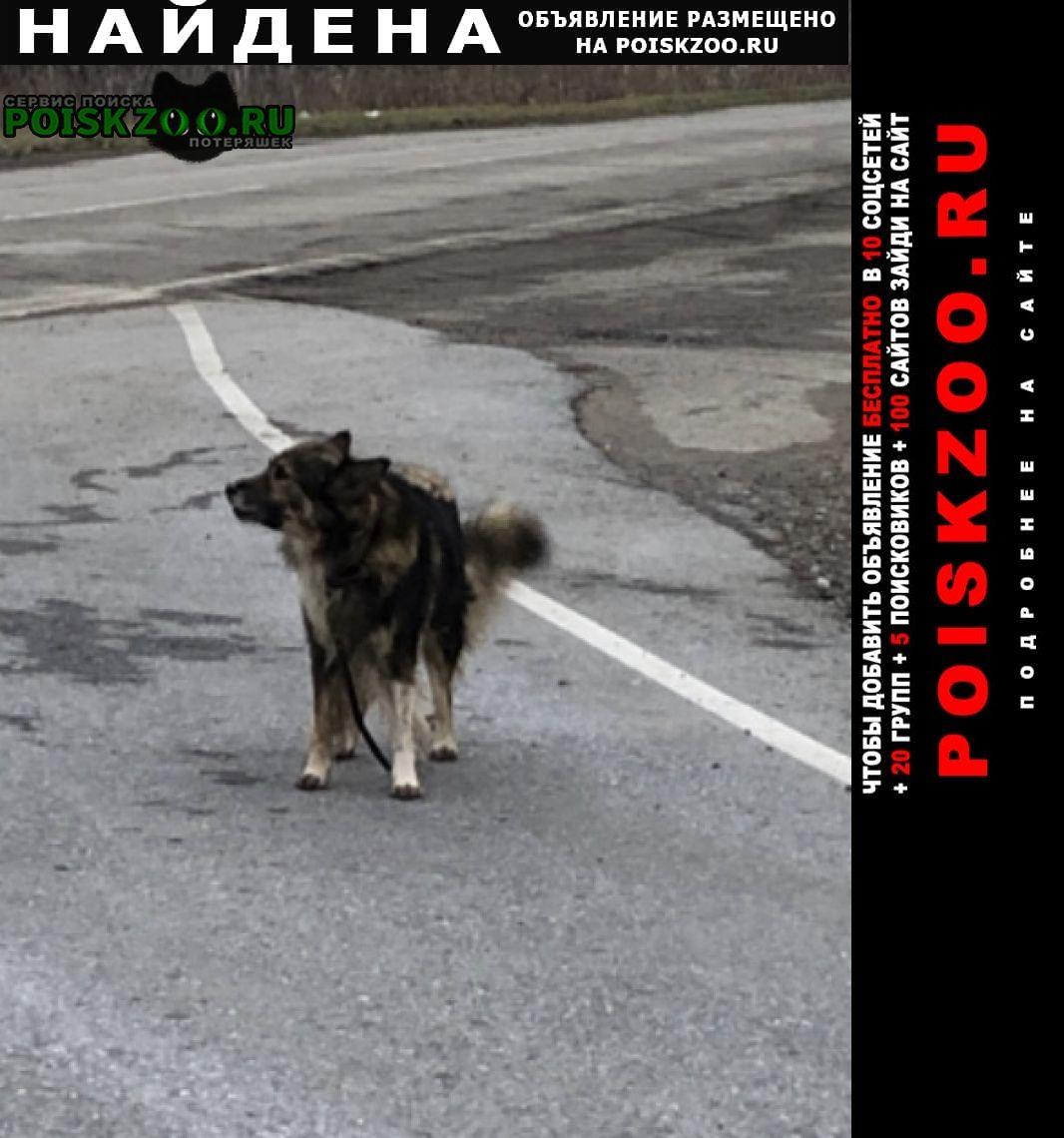 Найдена собака на 606 км тюкалинского тр Омск