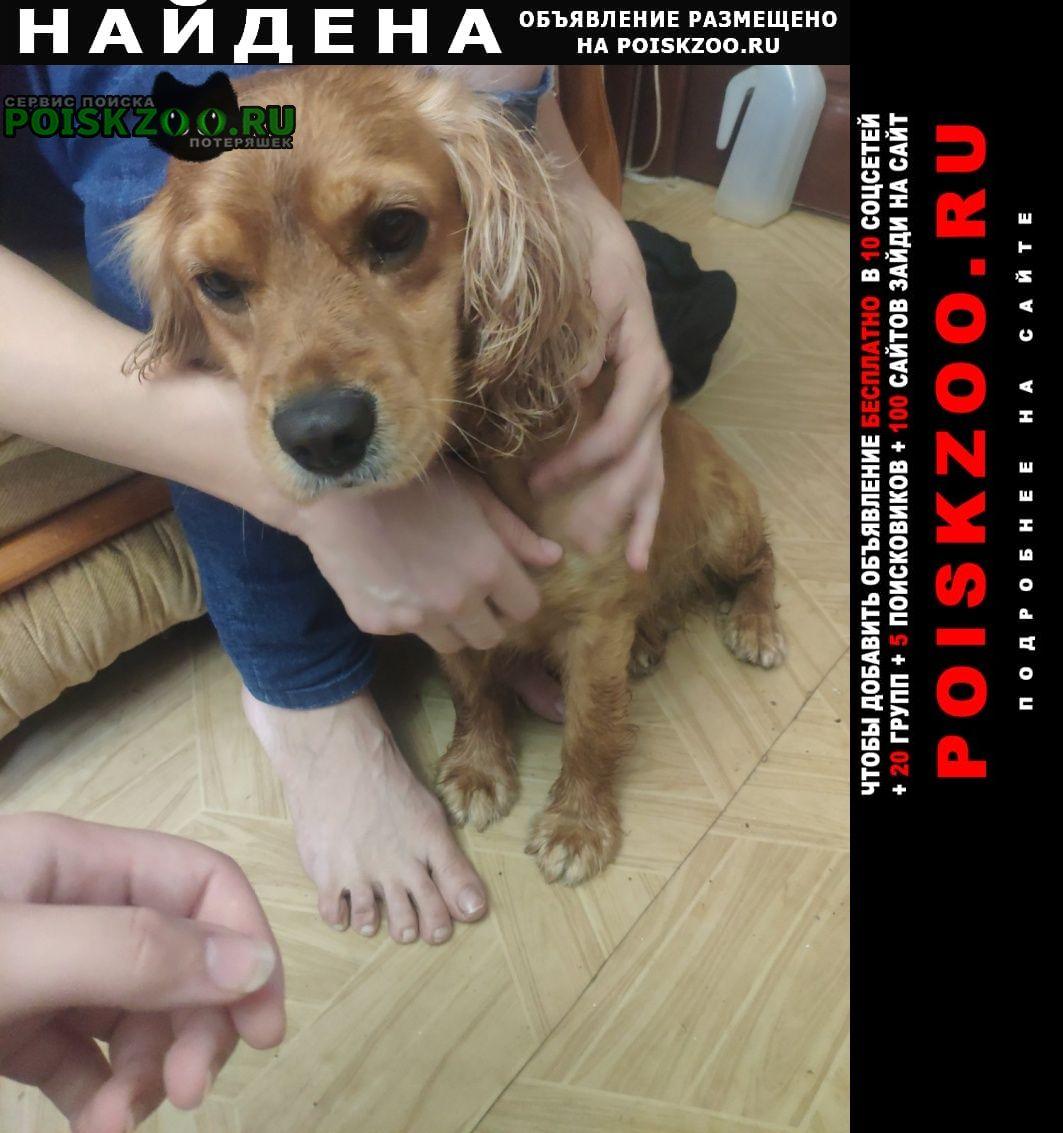 Найдена собака Севастополь