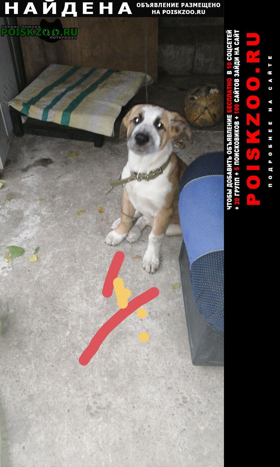 Найдена собака ценок Малаховка