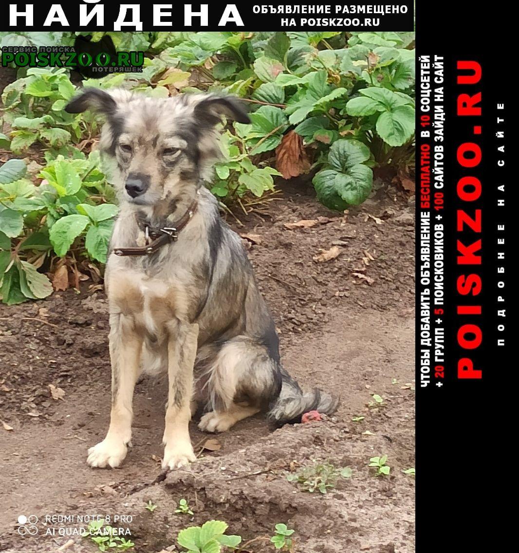 Найдена собака Дивеево
