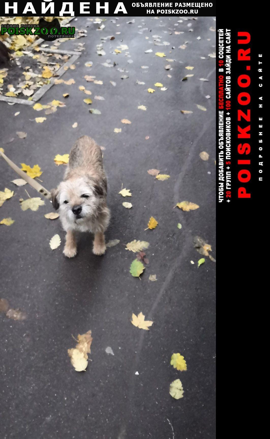 Найдена собака Воронеж