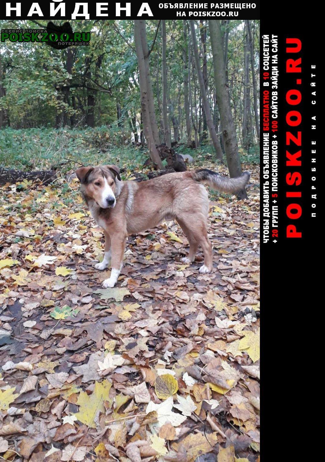 Найдена собака ул.ю.гагарина.55б. Калининград (Кенигсберг)