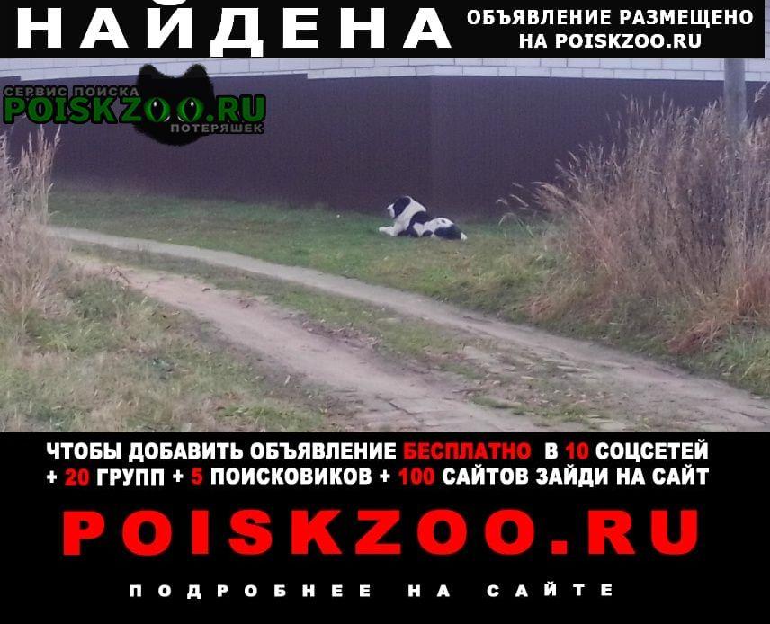 Найдена собака д.трахино Киржач