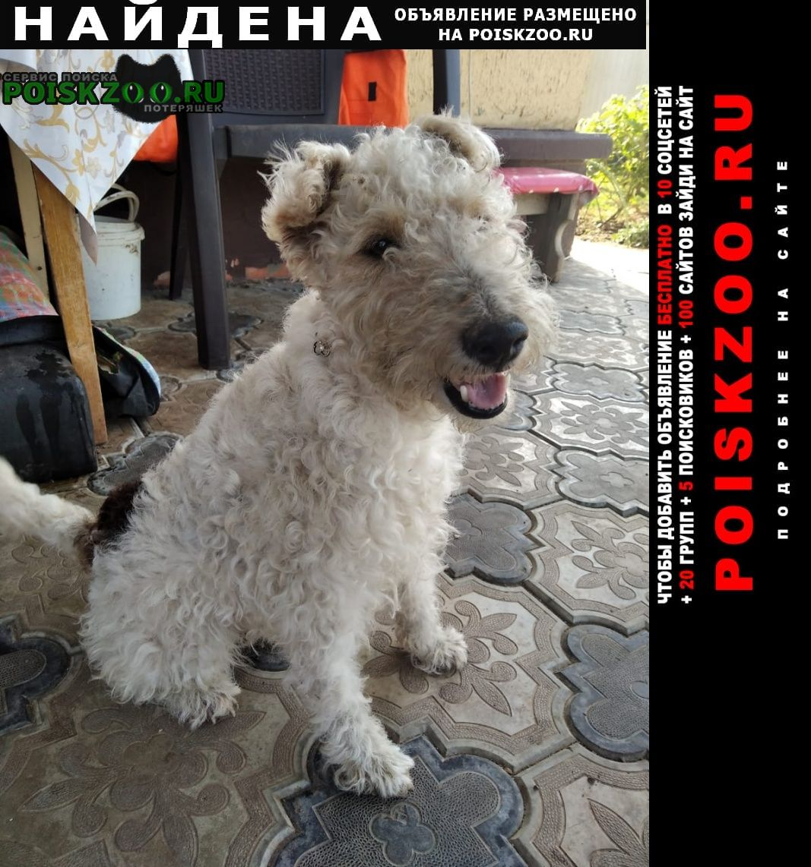 Найдена собака фокстерьер Волгодонск