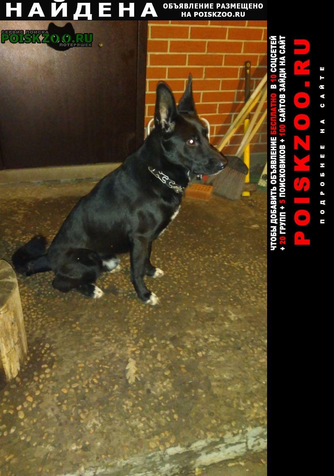 Найдена собака прибилась, черный кобель овчарки. Белгород