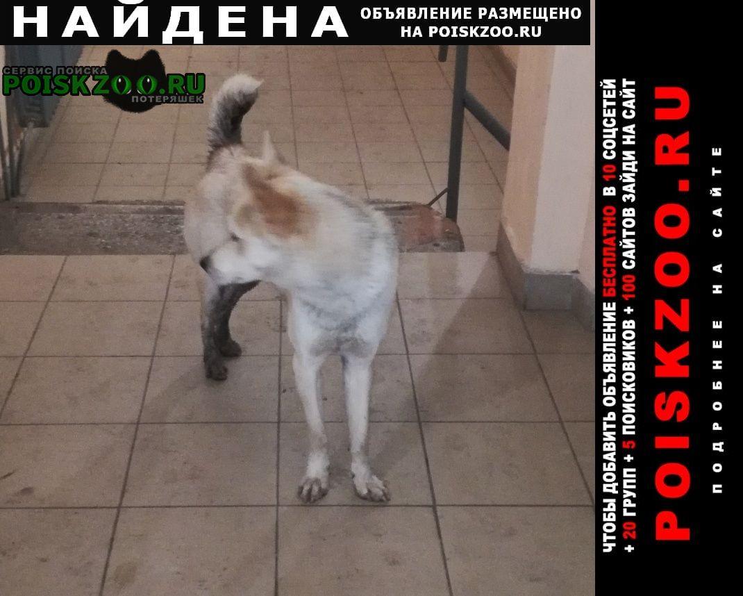 Найдена собака собачонка Красноярск