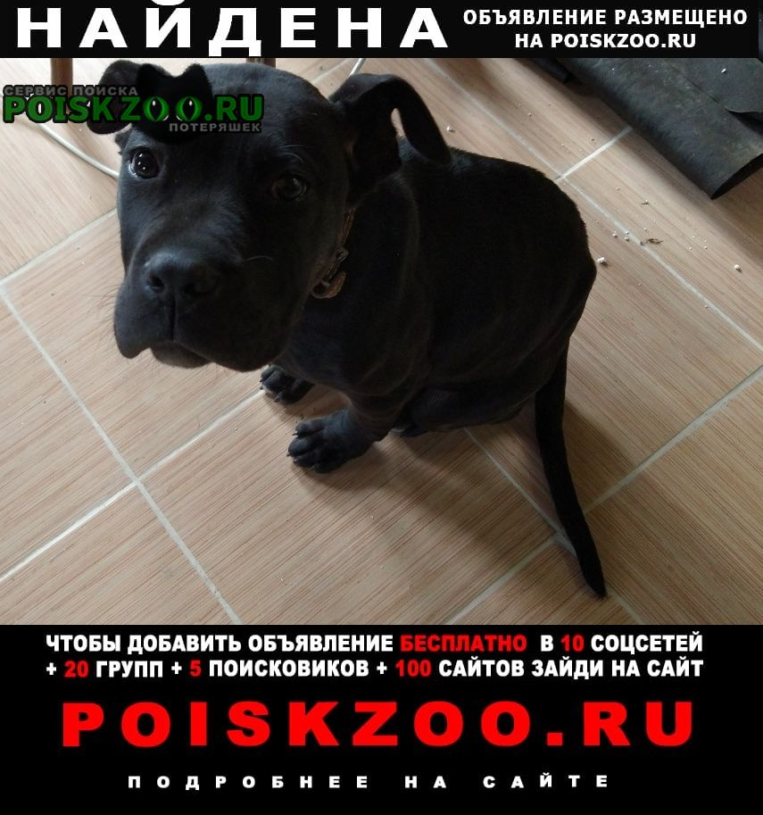 Найдена собака истринский район, вблизи дер.мансурово Истра