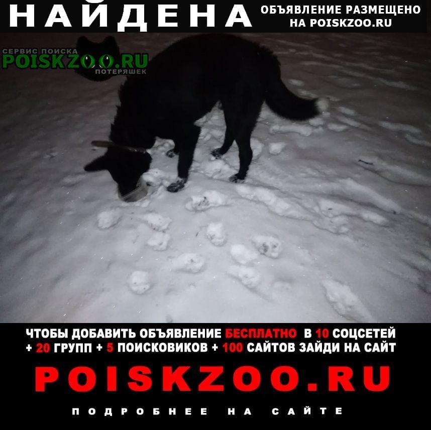 Найдена собака черный пес на уралмаше Екатеринбург