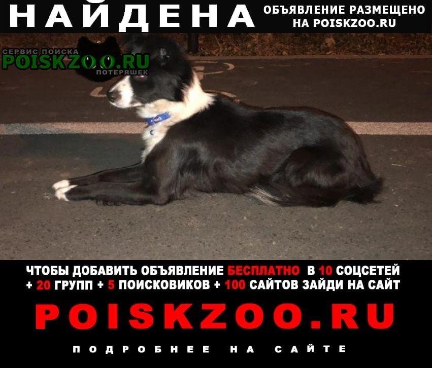 Найдена собака Ставрополь