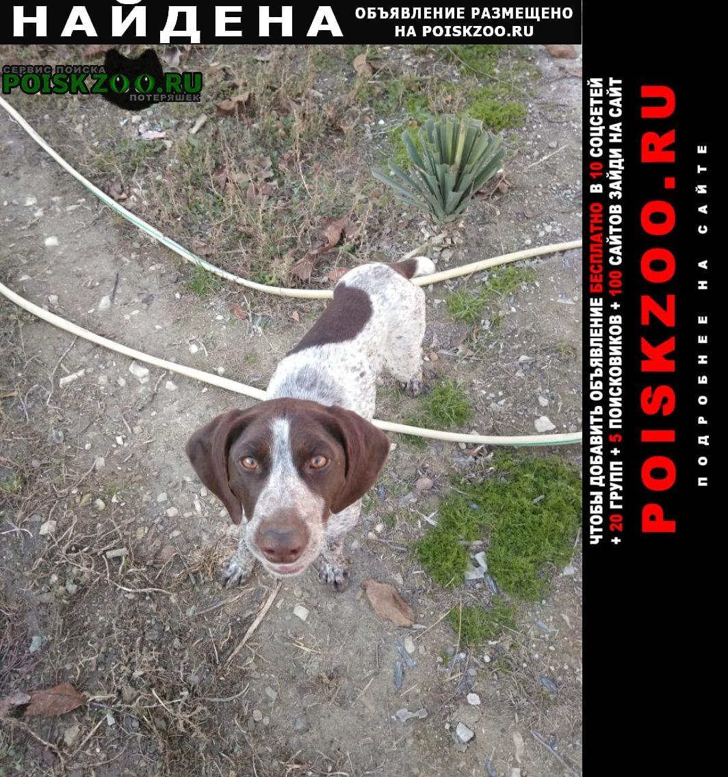 Найдена собака Новороссийск