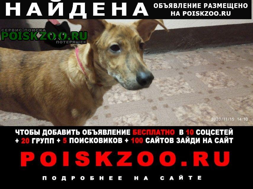Найдена собака рыжий пес тигровой масти Липецк
