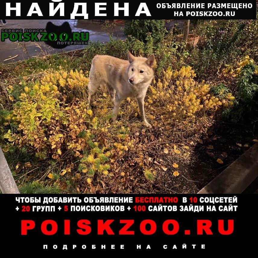 Найдена собака белая с ошейником Щербинка