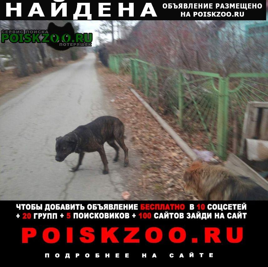 Найдена собака Магнитогорск
