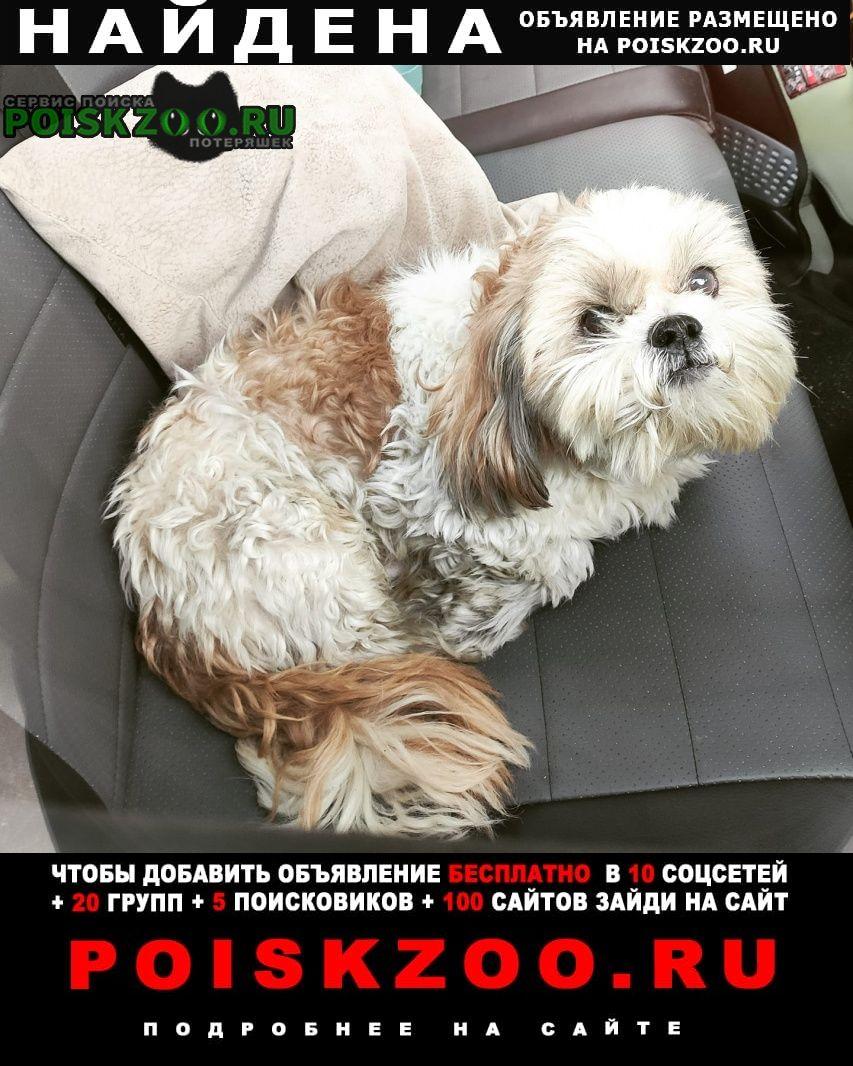 Найдена собака на мкаде (съезд с минского шоссе) Москва