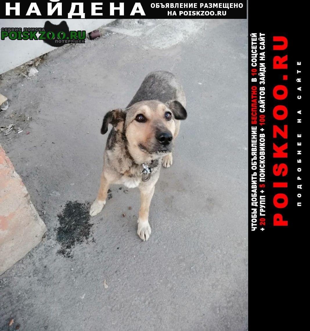 Найдена собака ищем дом Курган