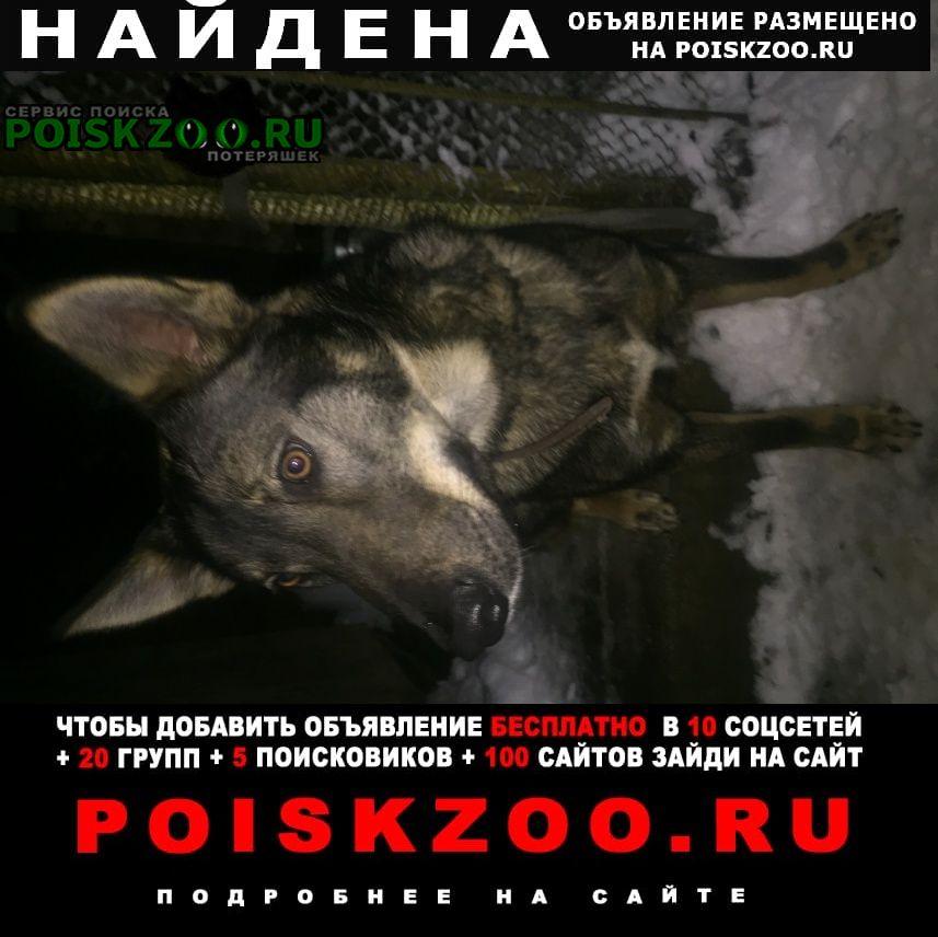 Найдена собака михайло ярцевское поселение Вороново