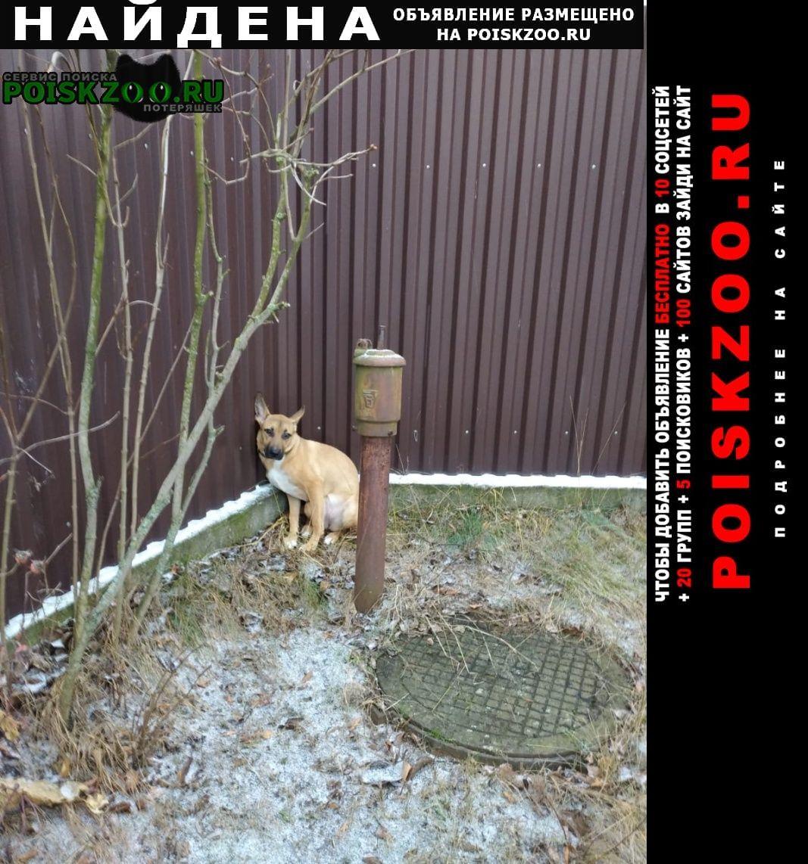 Найдена собака новое село раменский район Раменское