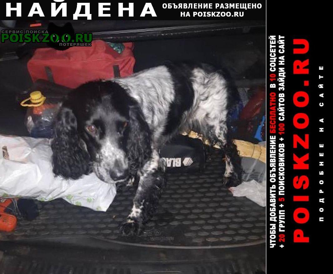 Найдена собака спаниель троицк сенькино-секерено Москва