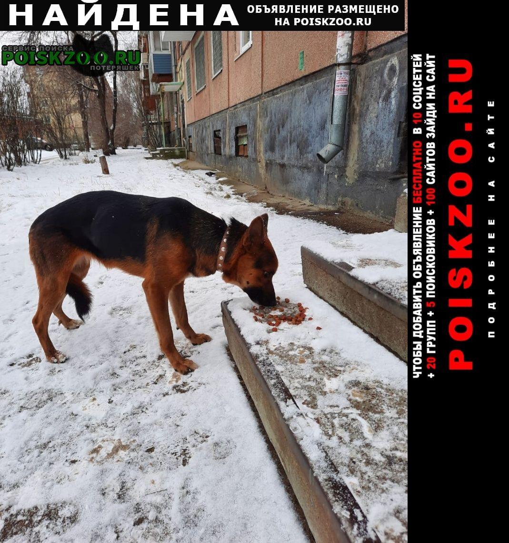 Найдена собака в 12 микрорайоне Ангарск