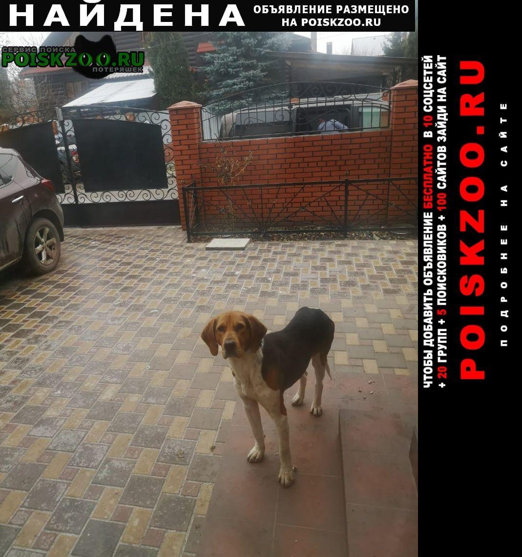 Найдена собака кобель Новомосковск