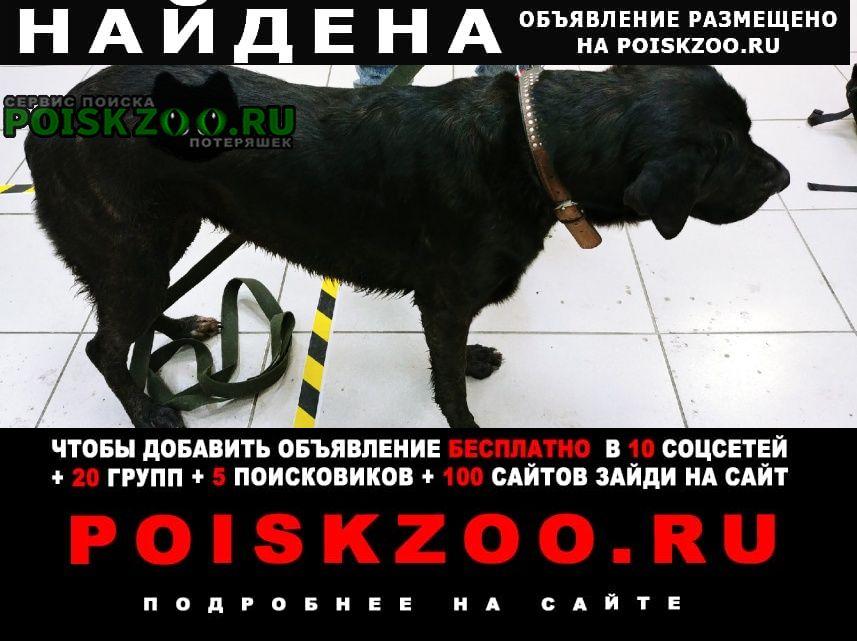 Найдена собака в калининском районе, спб Санкт-Петербург