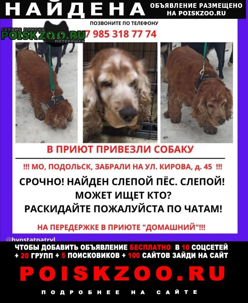 Найдена собака пёсик Подольск