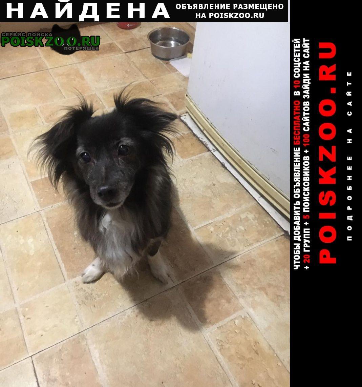 Найдена собака метро отрадное Москва