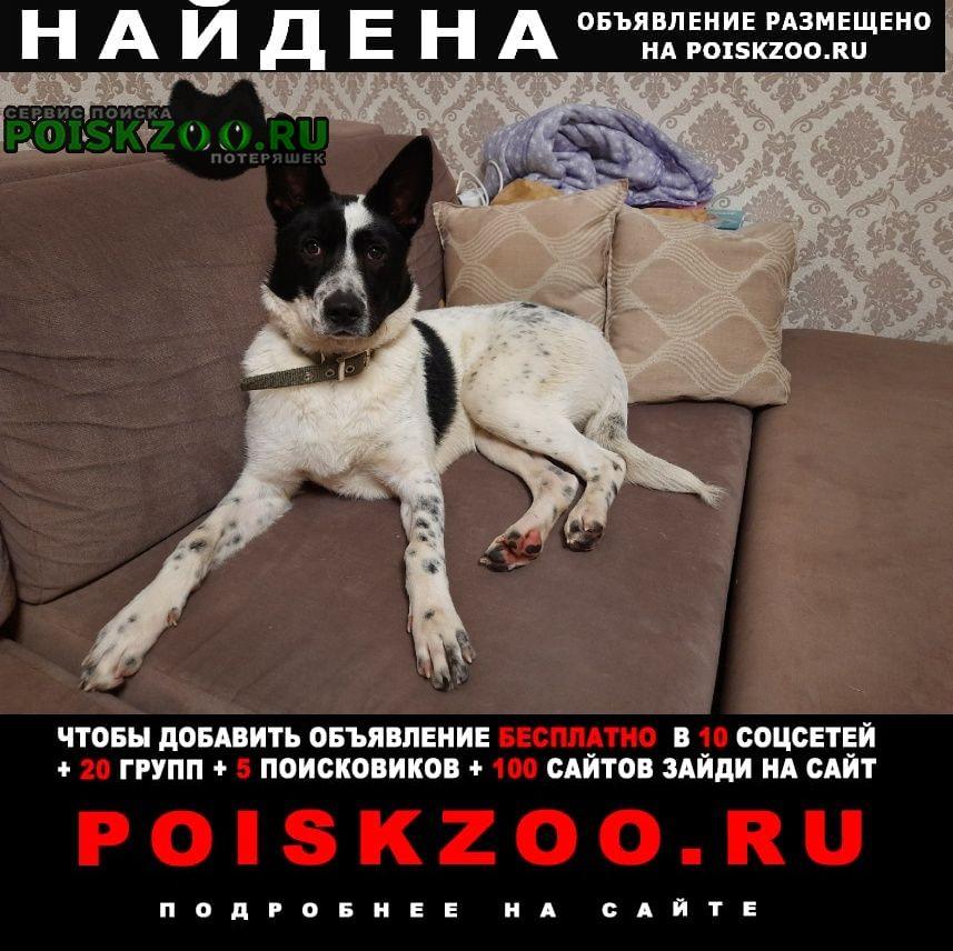 Найдена собака домашняя Лобня