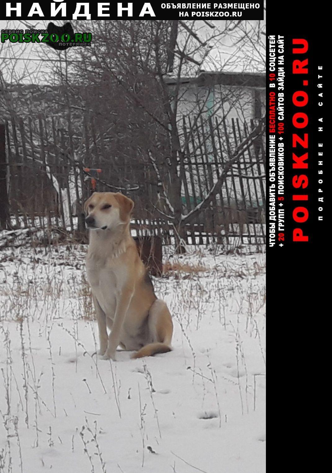 Татищево Найдена собака русская гончая в районе д. ильиновка