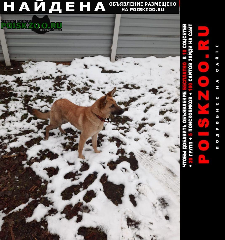 Найдена собака рыжая Москва