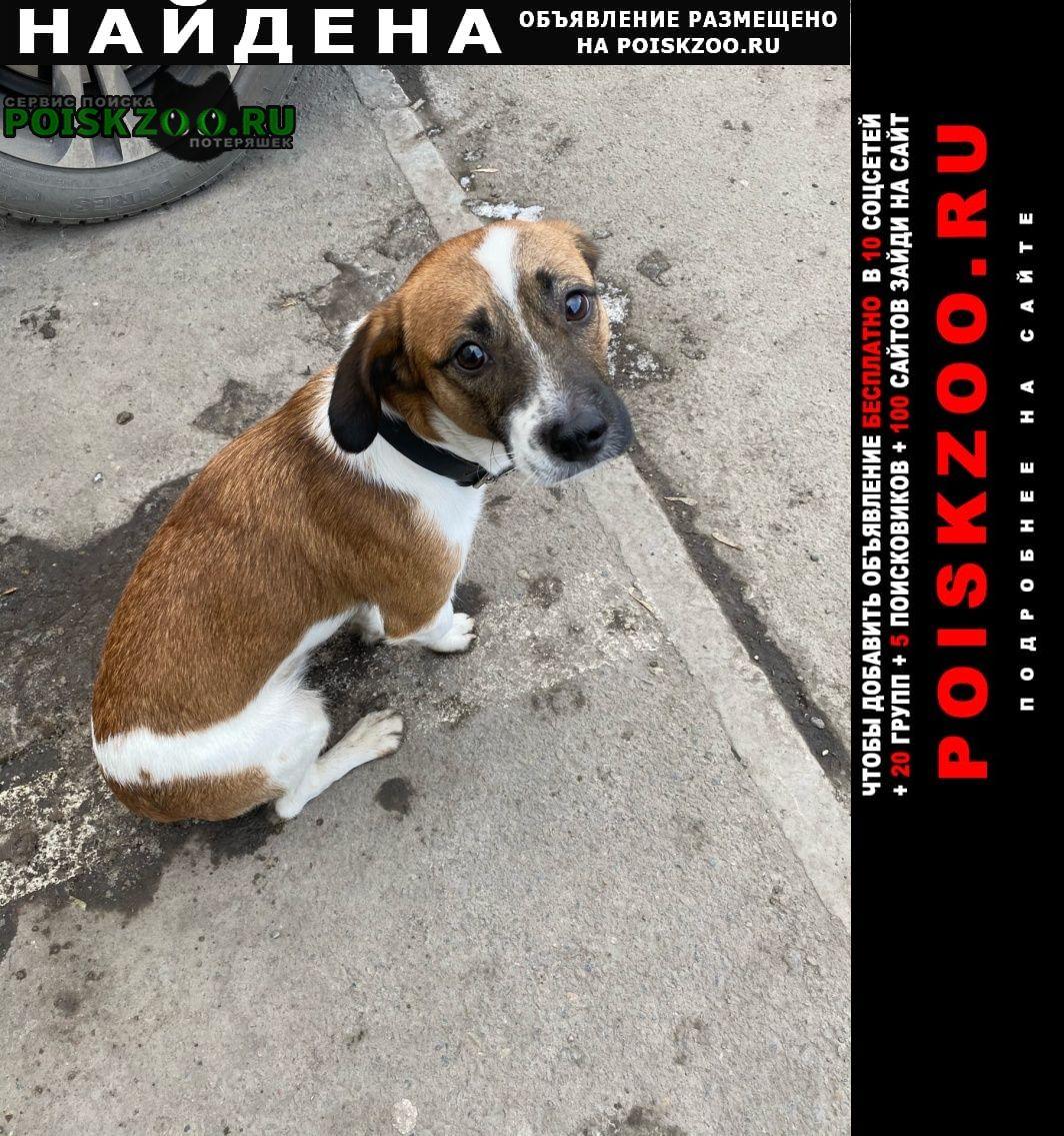 Найдена собака мальчик, 25.11 Красноярск