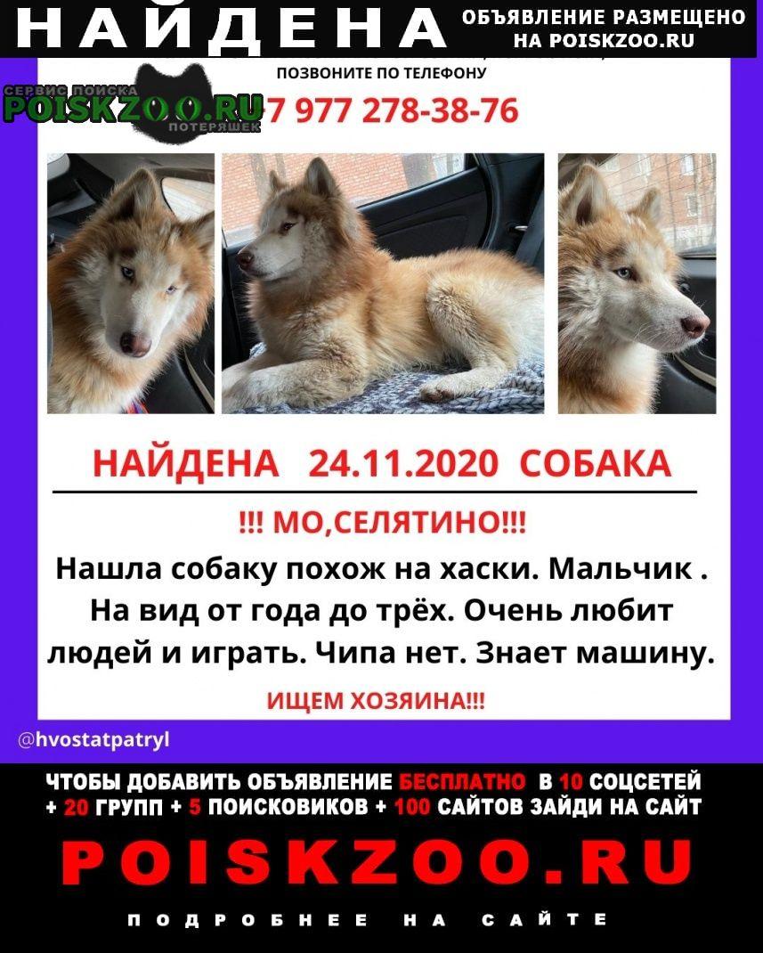 Найдена собака пес ищу хозяина Москва