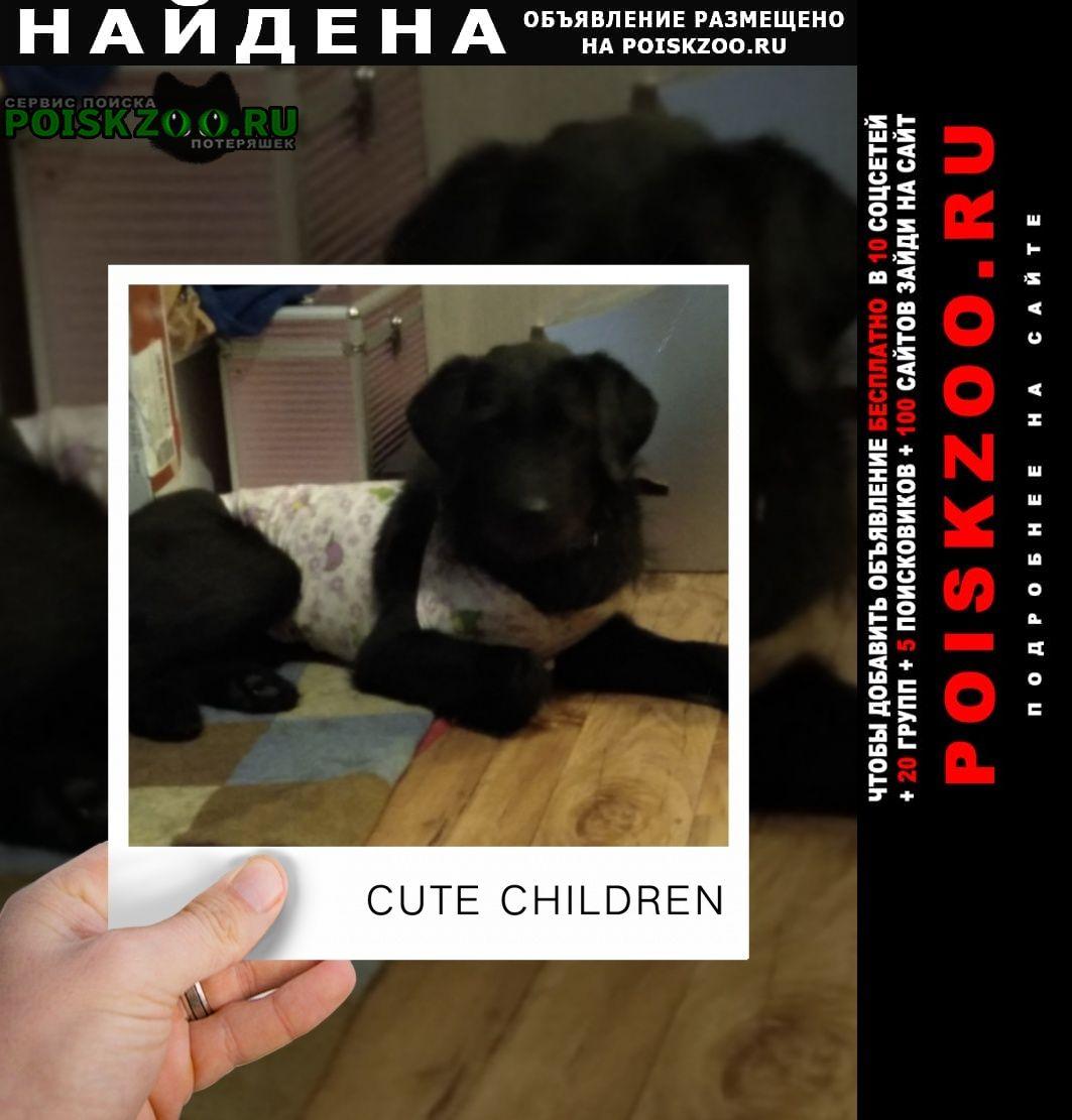 Найдена собака чисто черная добрая собачка Иркутск