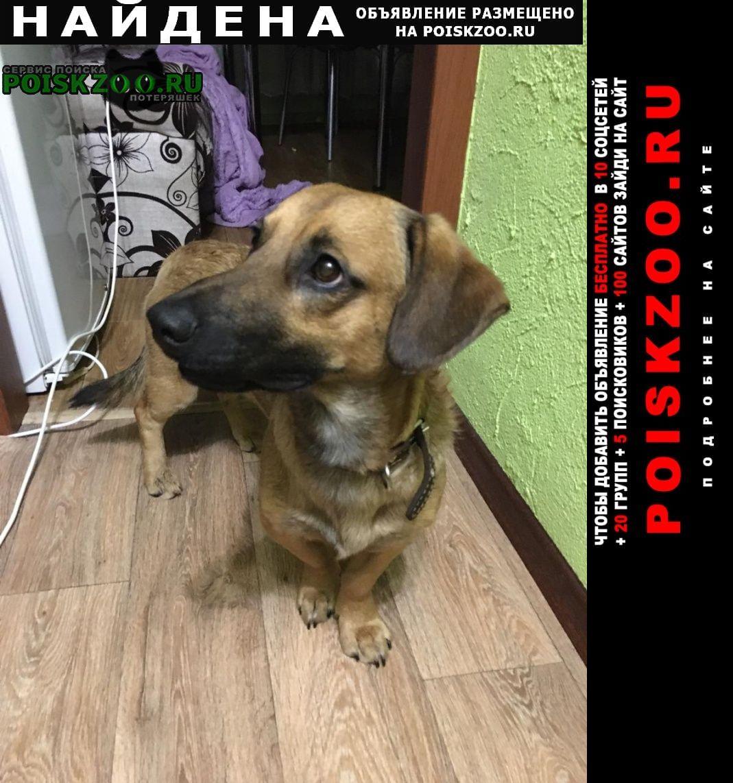 Найдена собака г.ивпново ул.гагарина, вечер 24. Иваново