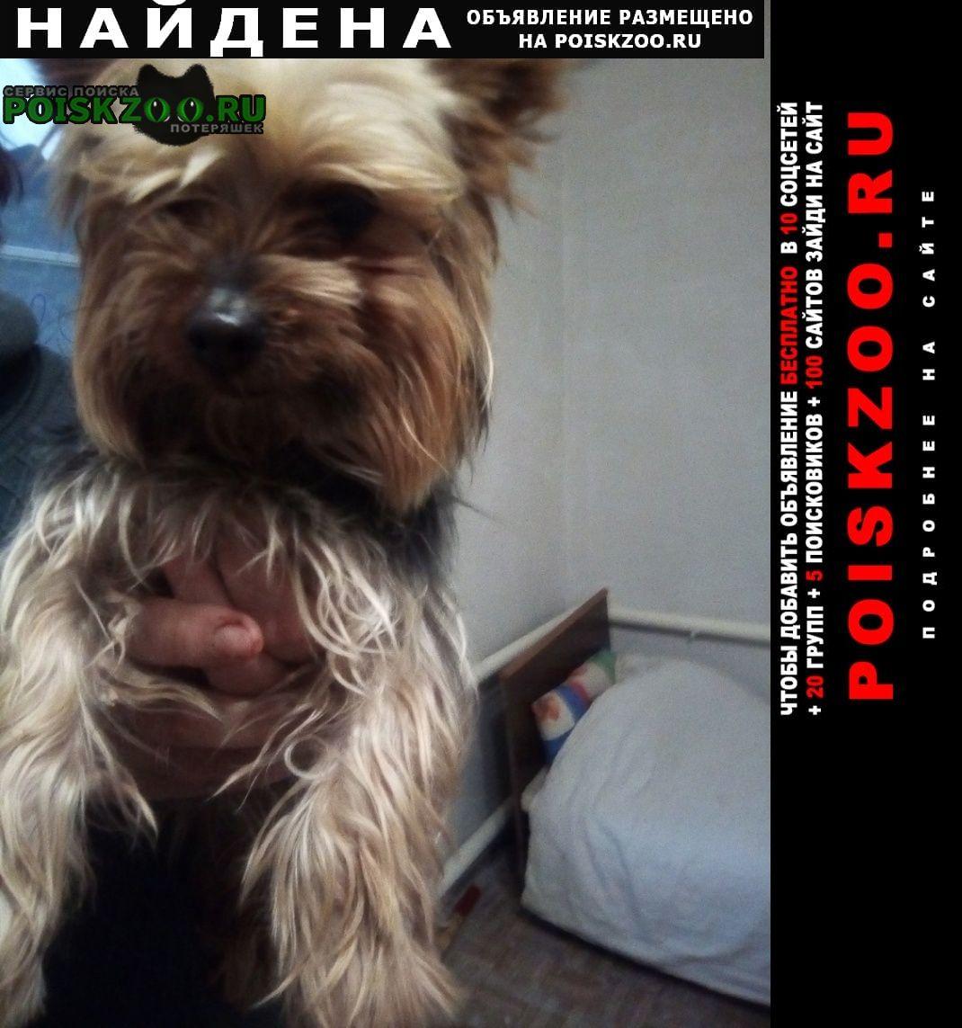 Найдена собака йорк с красным ошейником Макеевка