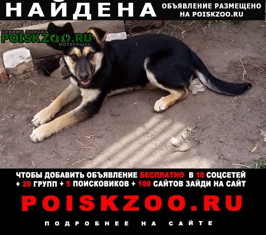 Найдена собака ищем хозяев стерилизованной собаке. Курган
