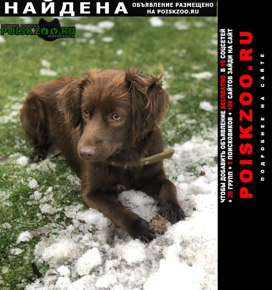 Найдена собака девочка Шаховская