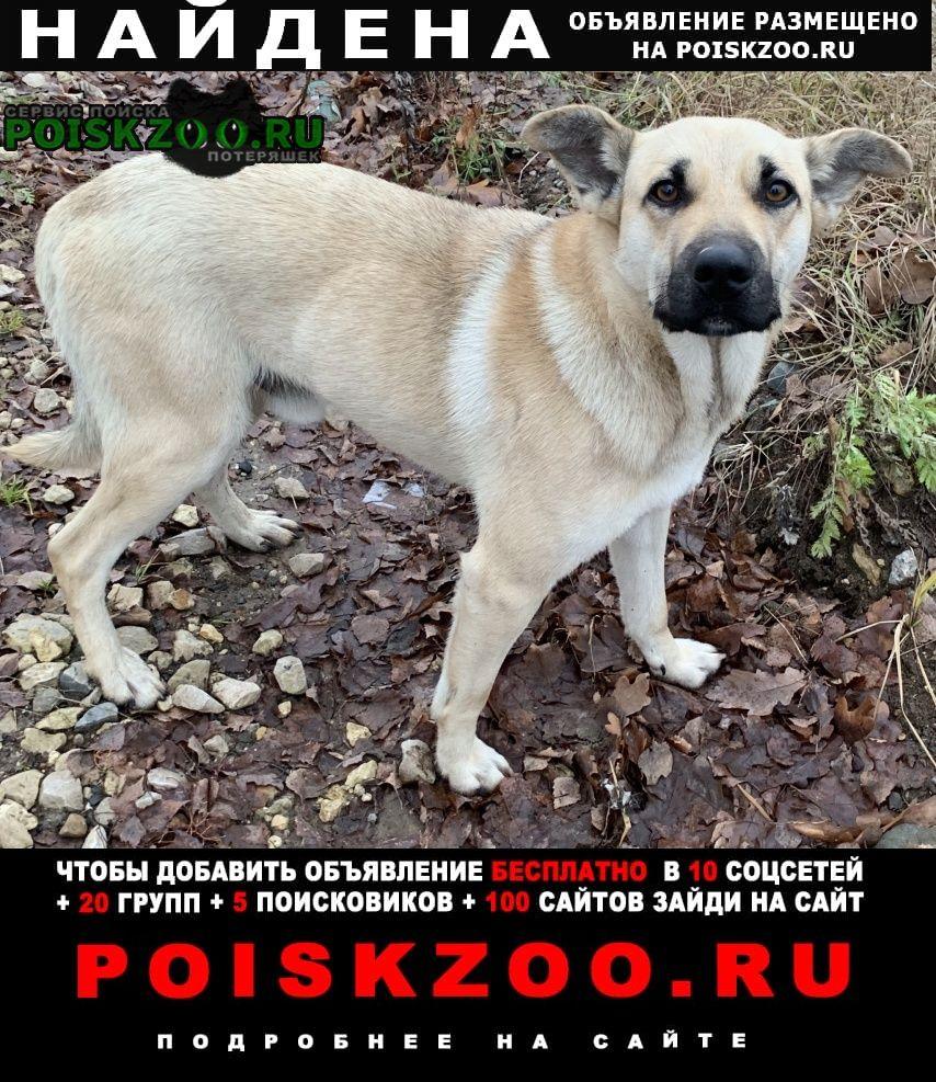 Найдена собака в деревне пятница Солнечногорск