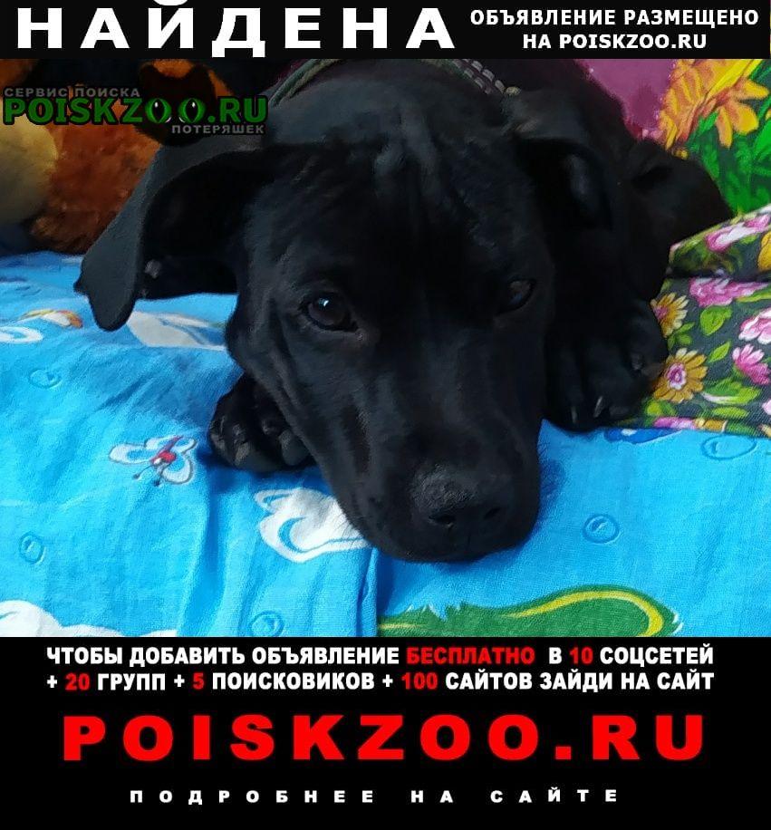 Найдена собака с ошейником в п. рассвет Ростов-на-Дону