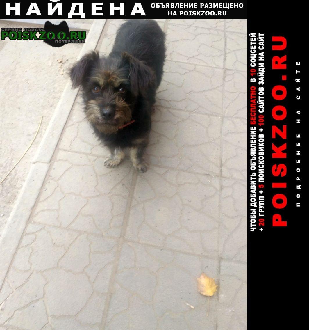 Найдена собака Таганрог