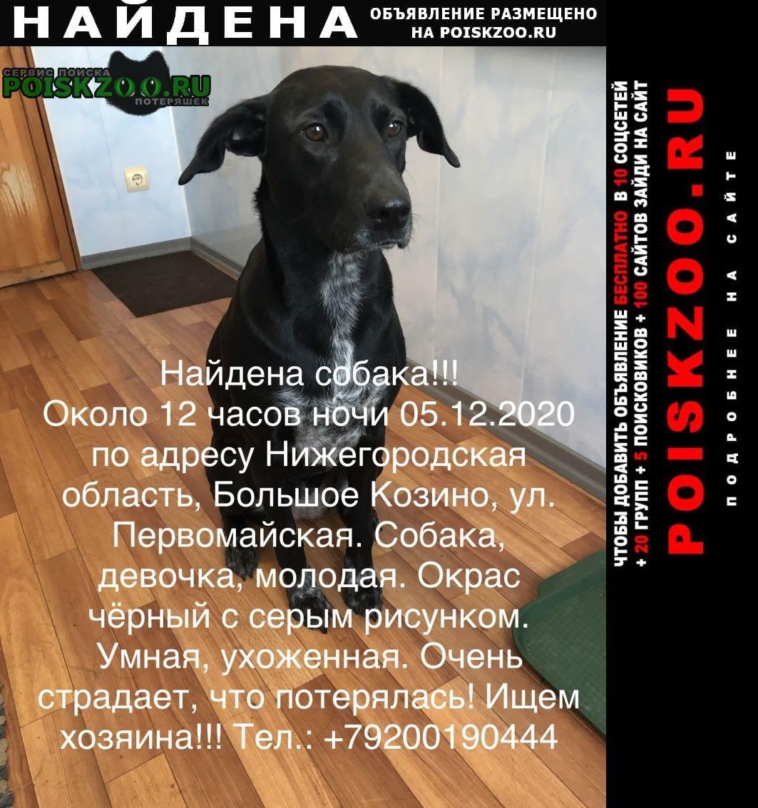 Найдена собака ищем хозяина Большое Козино