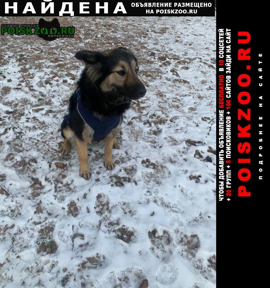 Найдена собака девочка Апрелевка