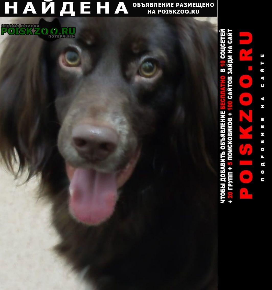 Найдена собака Новосибирск