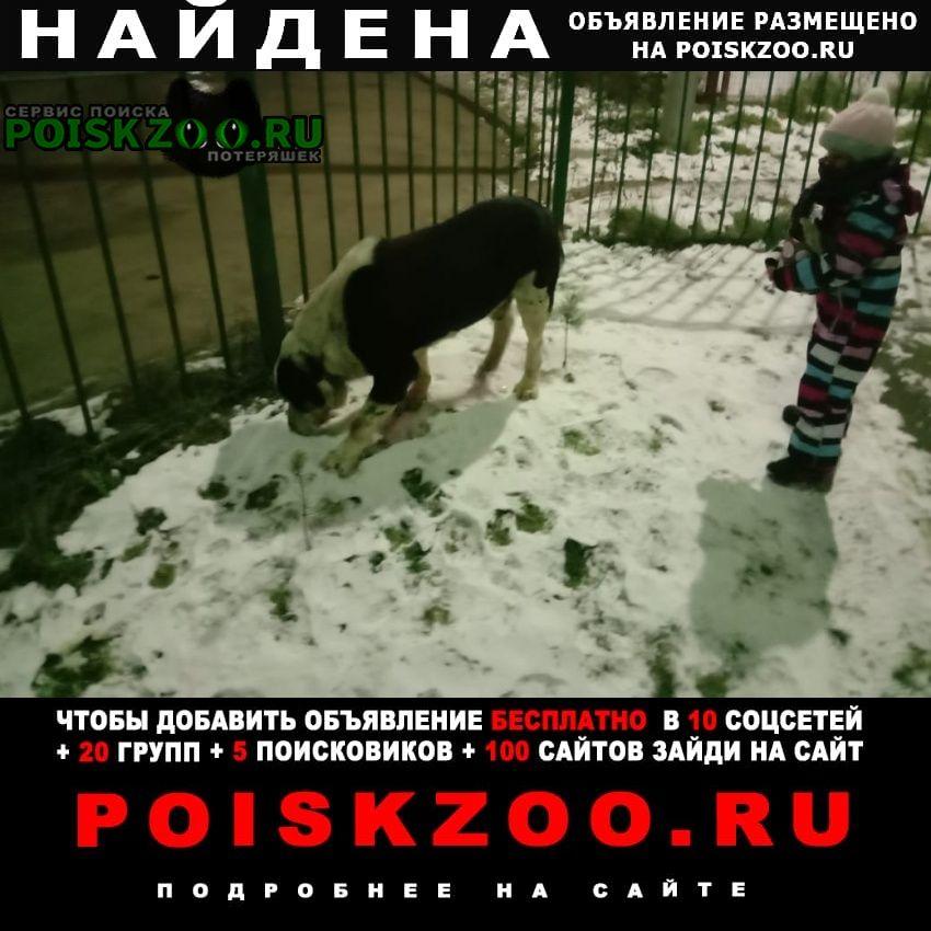 Найдена собака алабай Красногорск
