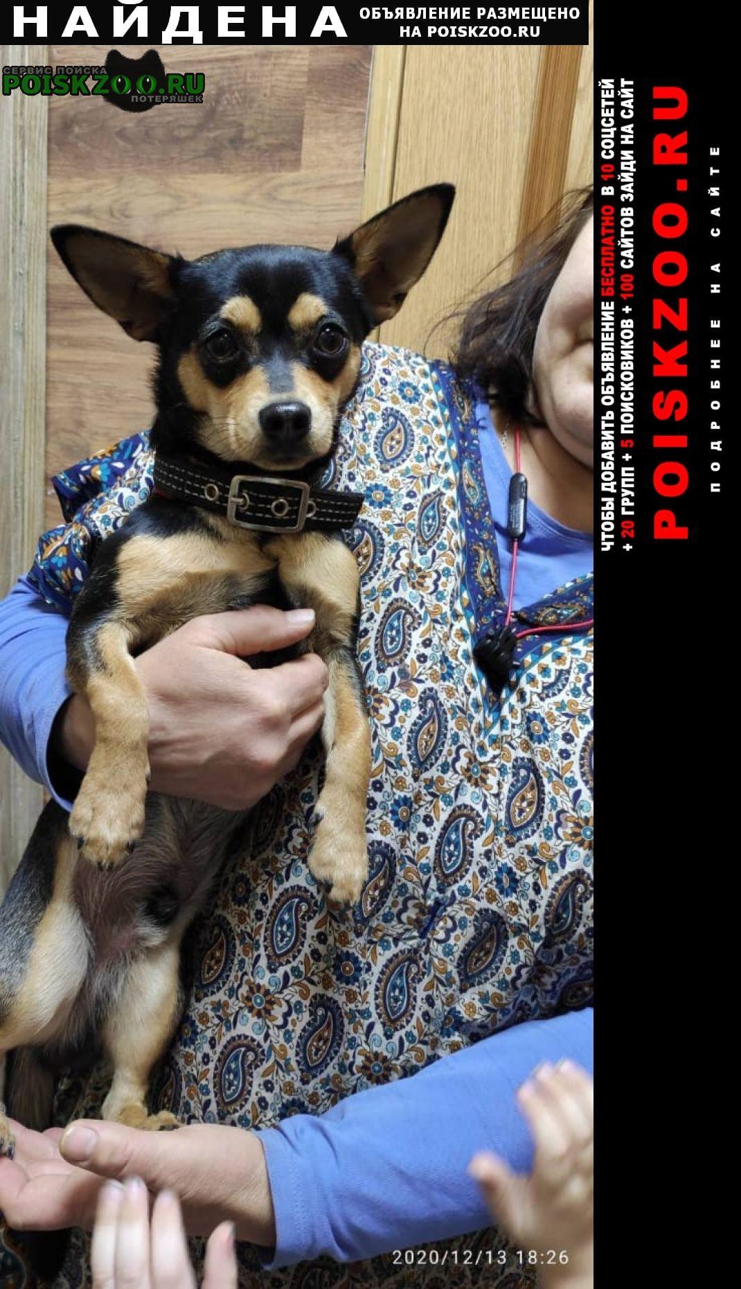 Найдена собака той терьер Волгоград