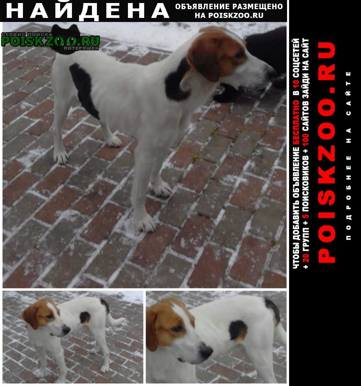 Найдена собака щенок русской пегой гончей кобель Заокский
