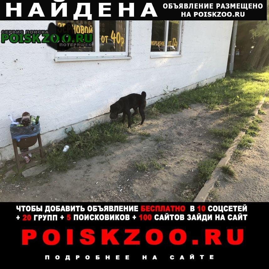 Найдена собака ул. инструментальная, 13б Таганрог