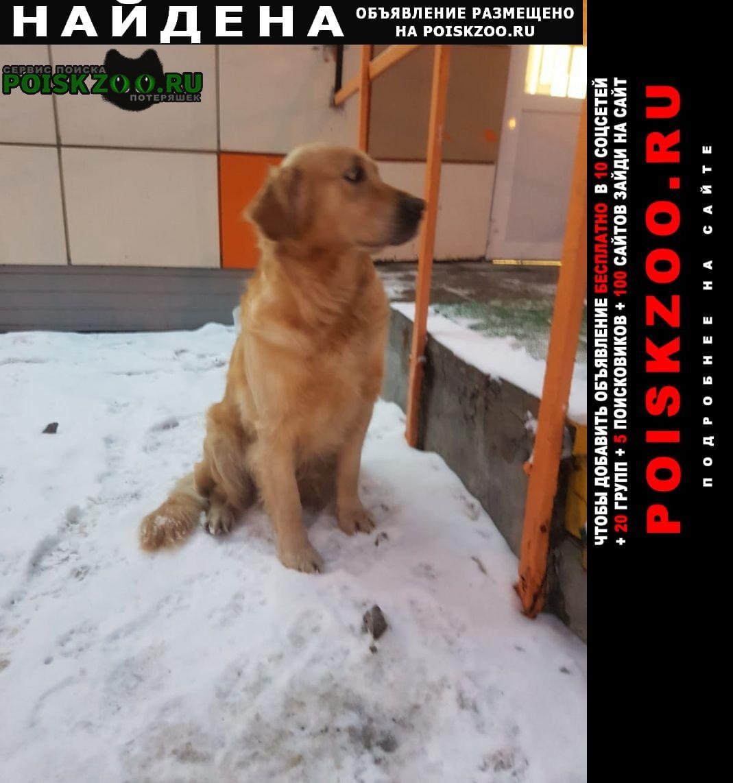 Найдена собака Орехово-Зуево