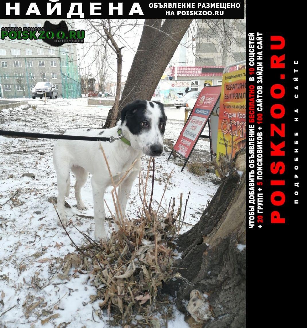 Найдена собака Красноярск